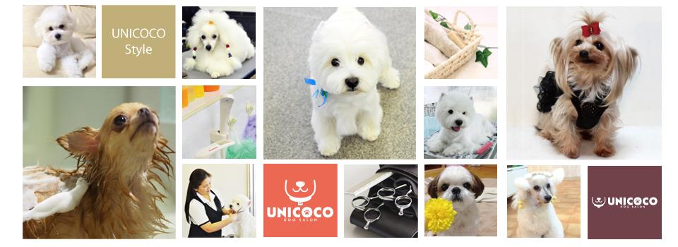大阪市城東区のトリミングサロン ドッグサロン ユニココ / ご愛犬の美と健康をサポートします。